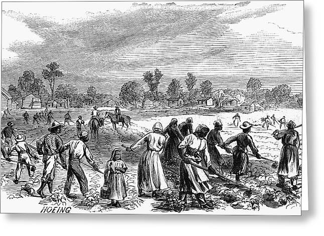 Cotton Plantation, 1867 Greeting Card by Granger
