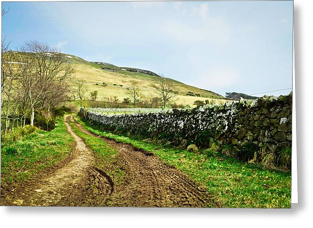 Border Photographs Greeting Cards - Country track Greeting Card by Tom Gowanlock