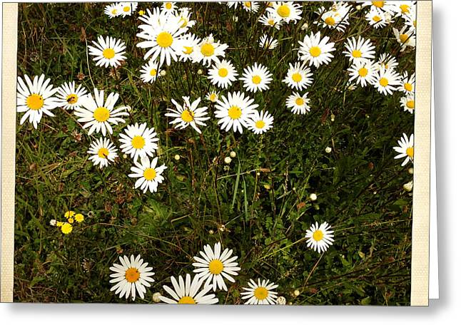 Petal Greeting Cards - Daisies Greeting Card by Les Cunliffe