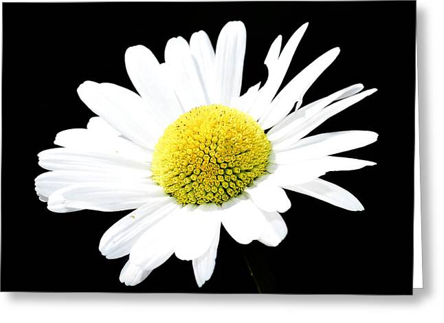 Spring Scenes Mixed Media Greeting Cards - Daisy flowers  Greeting Card by Toppart Sweden