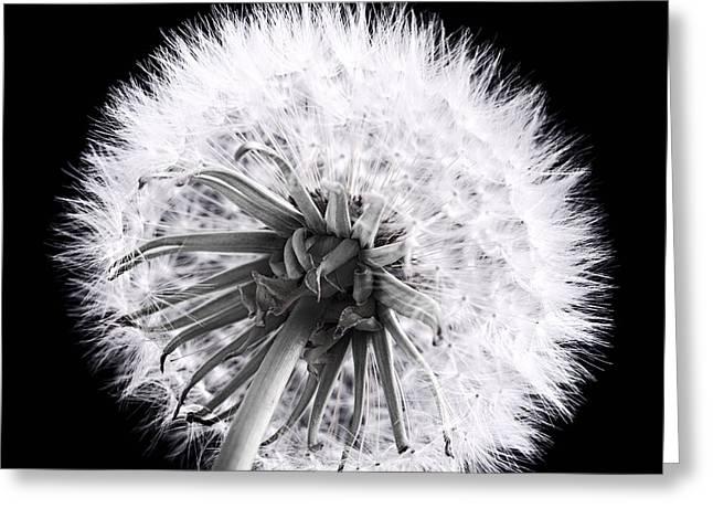 Dandelions Greeting Cards - Dandelion Greeting Card by Elena Elisseeva