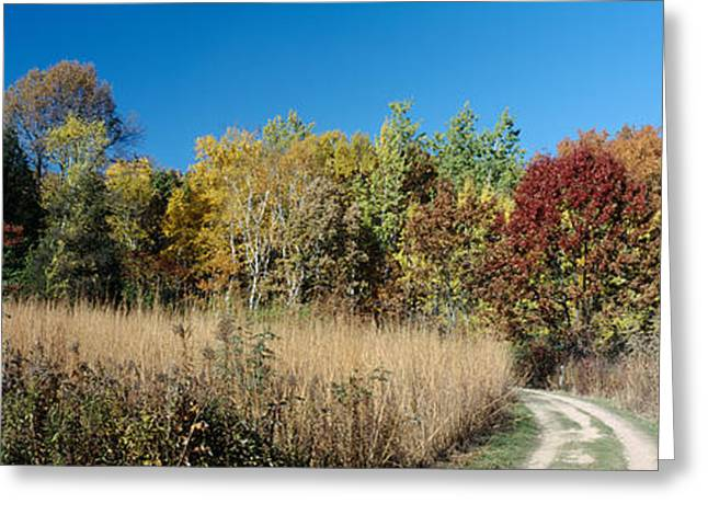 Colors Of Autumn Greeting Cards - Dirt Road Passing Through A Forest Greeting Card by Panoramic Images