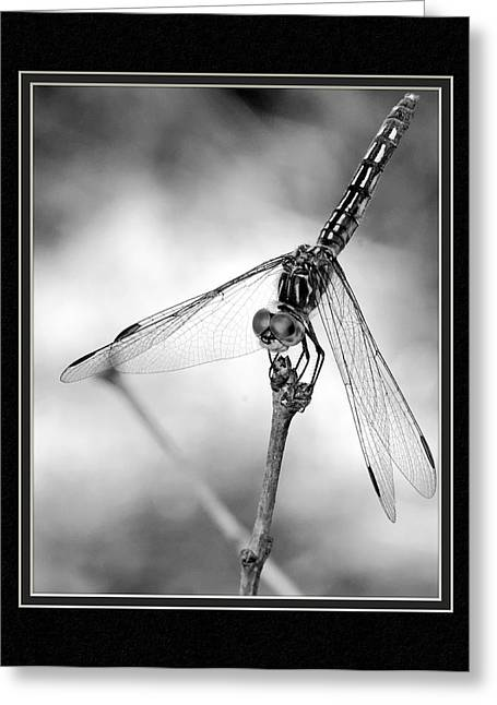 Matting Greeting Cards - Dragonfly Close-Up II Greeting Card by Charles Feagans