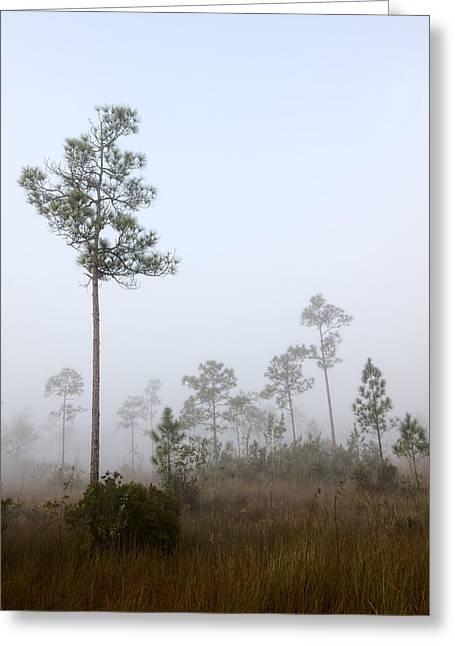Biosphere Reserve Greeting Cards - Early morning fog Landscape-5 Greeting Card by Rudy Umans