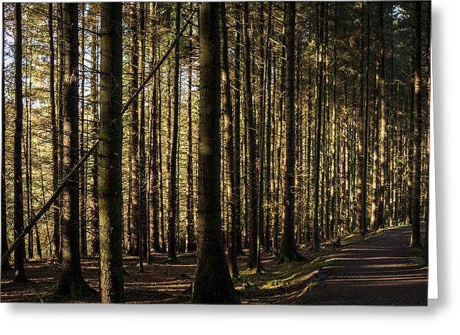 Walking Greeting Cards - Entwistle Forest. Greeting Card by Daniel Kay