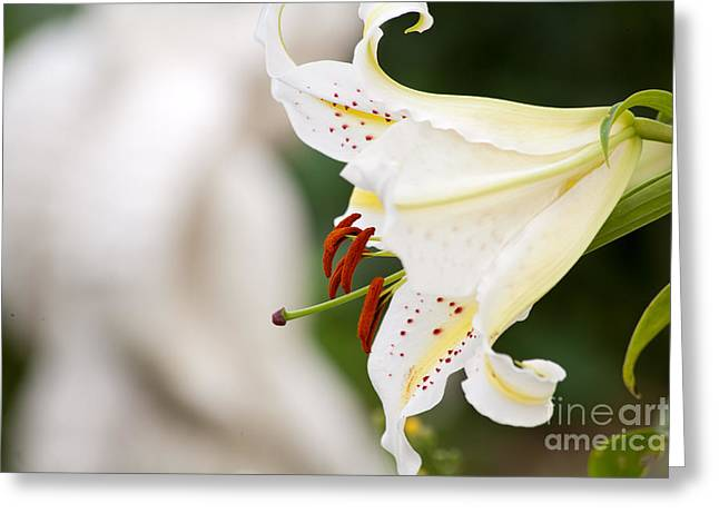 Pause Greeting Cards - Flower Greeting Card by Christine Sponchia