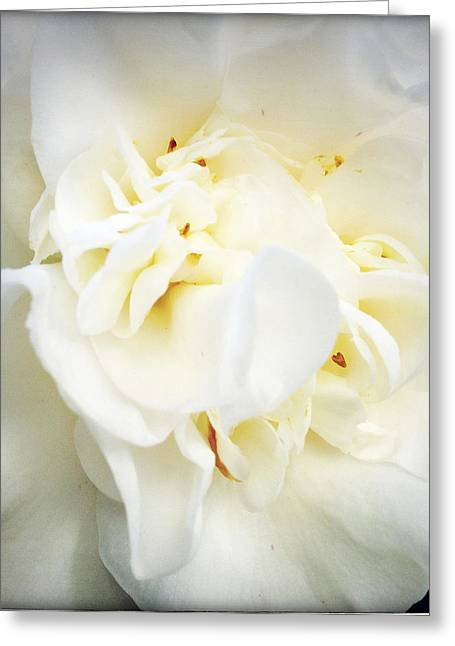 Flower Photos Greeting Cards - Flower Greeting Card by Les Cunliffe