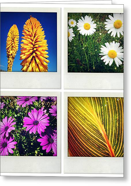 Season Flower Greeting Cards - Flowers Greeting Card by Les Cunliffe