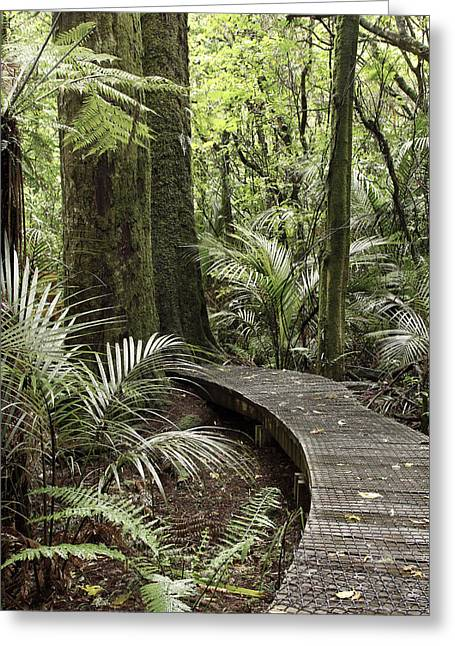 Tropical Photographs Greeting Cards - Forest boardwalk Greeting Card by Les Cunliffe