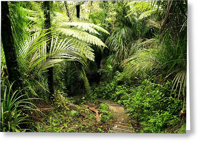 Jungle Greeting Cards - Forest Greeting Card by Les Cunliffe