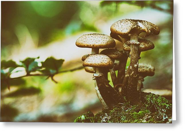 Ground Level Greeting Cards - Forest Mushrooms Greeting Card by Mountain Dreams