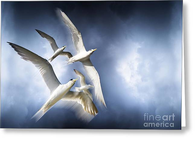 Freedom Greeting Card by Jorgo Photography - Wall Art Gallery