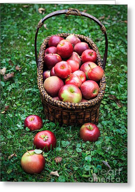 Orchard Greeting Cards - Fresh picked apples Greeting Card by Edward Fielding