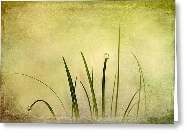 Twinkle Greeting Cards - Grass Greeting Card by Svetlana Sewell