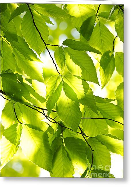 Growing Greeting Cards - Green spring leaves Greeting Card by Elena Elisseeva
