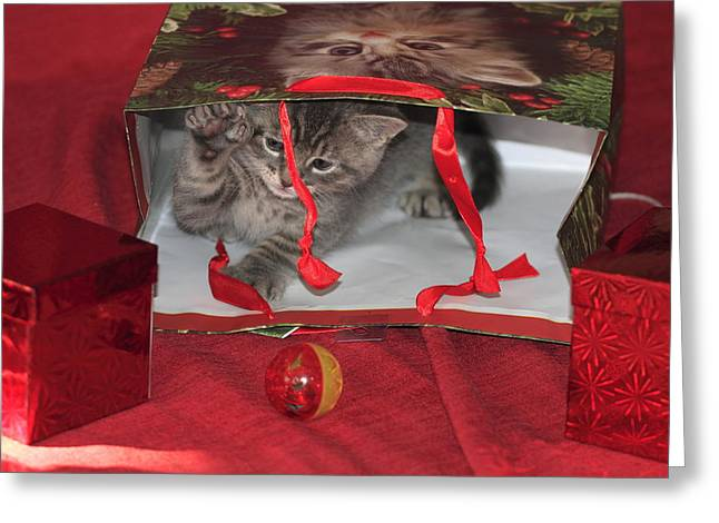 House Pet Greeting Cards - Holiday Kitten Greeting Card by Geraldine Scull