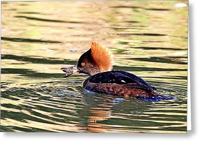 Hunting Bird Greeting Cards - Hooded Merganser Greeting Card by Ira Runyan