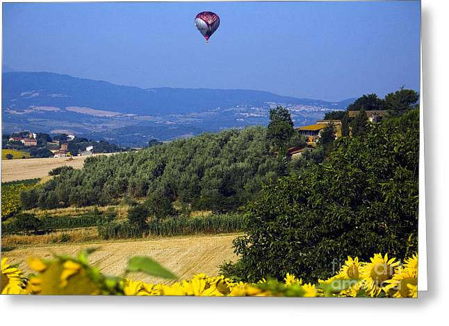 (olea Europaea) Greeting Cards - Hot Air Balloon, Italy Greeting Card by Tim Holt