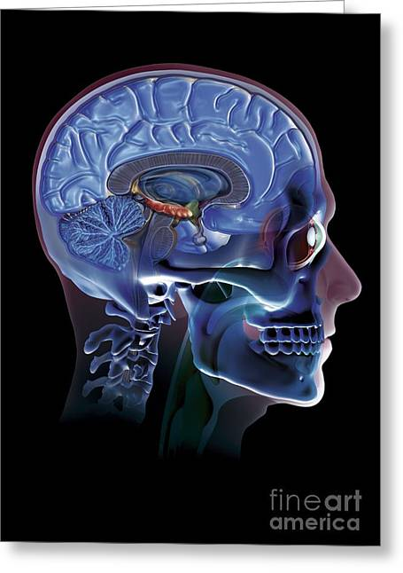 Psychological Background Greeting Cards - Human Head, Artwork Greeting Card by Claus Lunau
