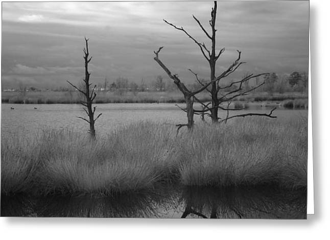 Infrared picture of nature areas in the Netherlands Dwingelderveld Greeting Card by Ronald Jansen