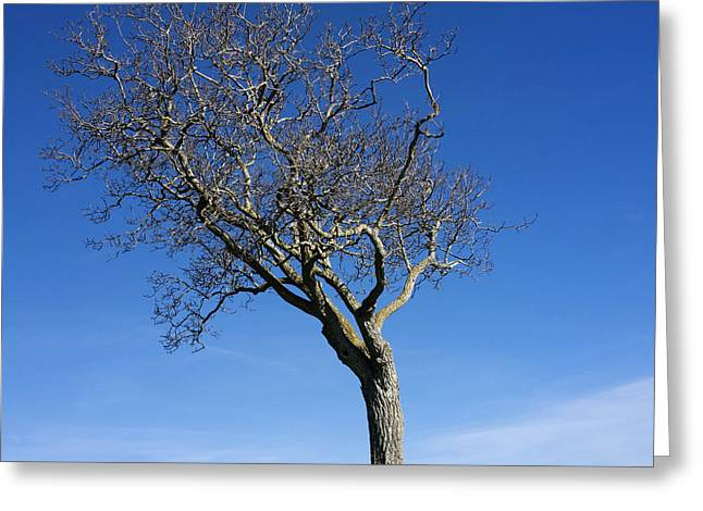 Exterior Views Greeting Cards - Isolated tree Greeting Card by Bernard Jaubert
