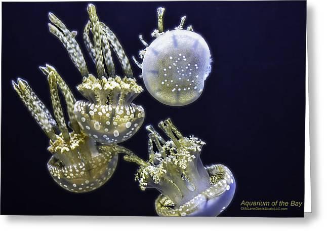 Jellyfish Pool Greeting Cards - Jellyfish of Aquarium of the bay San Francisco Greeting Card by LeeAnn McLaneGoetz McLaneGoetzStudioLLCcom