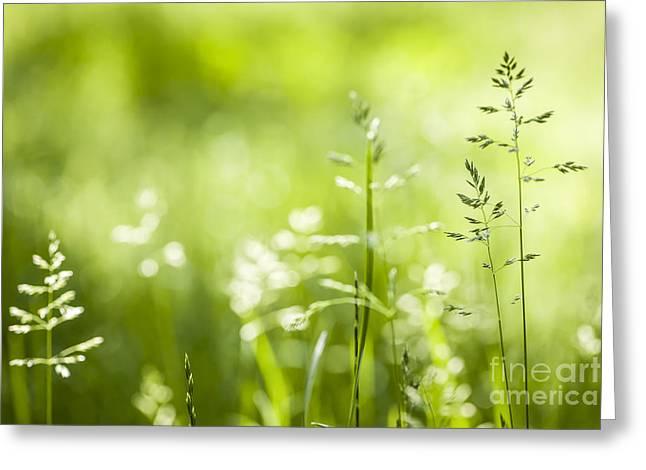 Fresh Green Greeting Cards - June grass flowering Greeting Card by Elena Elisseeva
