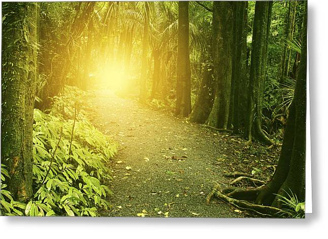 Woodland Scenes Greeting Cards - Jungle light Greeting Card by Les Cunliffe