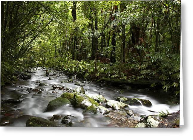 Stream Greeting Cards - Jungle stream Greeting Card by Les Cunliffe