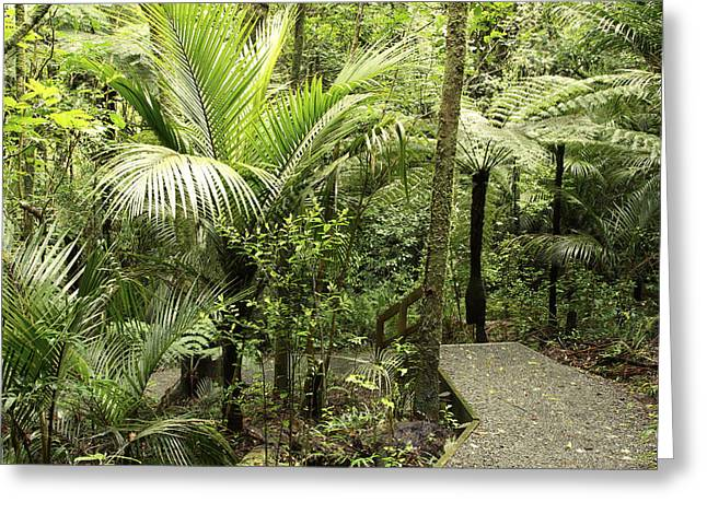 Tropical Photographs Greeting Cards - Jungle trail Greeting Card by Les Cunliffe