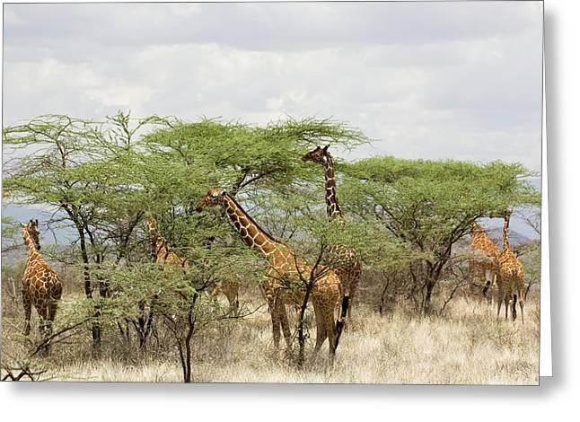 Kenya, Samburu National Reserve Greeting Card by Jaynes Gallery