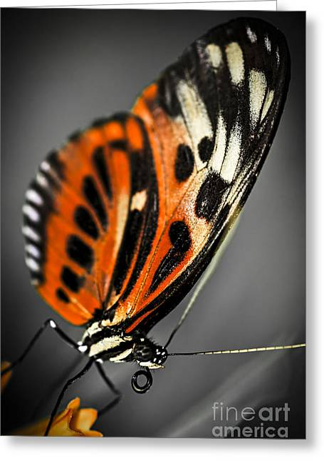 Stamen Greeting Cards - Large tiger butterfly Greeting Card by Elena Elisseeva