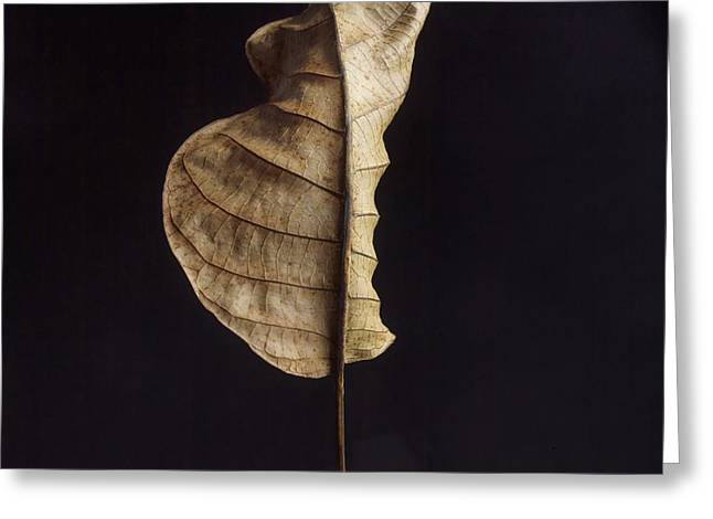 Back View Greeting Cards - Leaf Greeting Card by Bernard Jaubert
