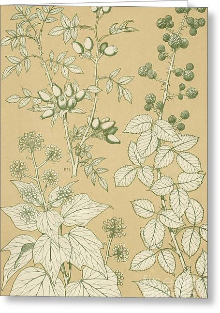 Ornaments Greeting Cards - Leaves from Nature Greeting Card by English School