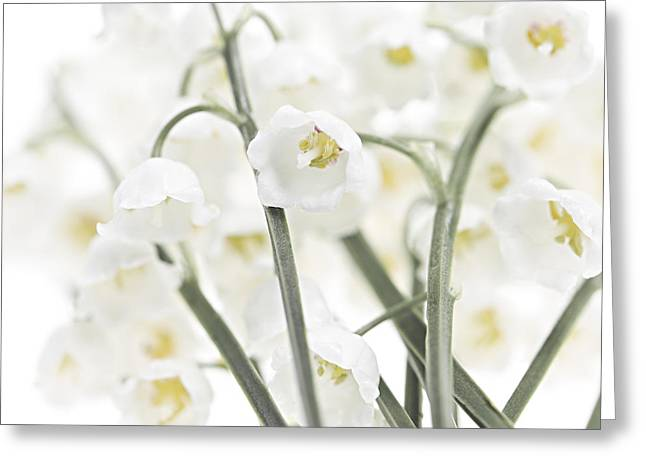 Easter Flowers Greeting Cards - Lily-of-the-valley flowers  Greeting Card by Elena Elisseeva