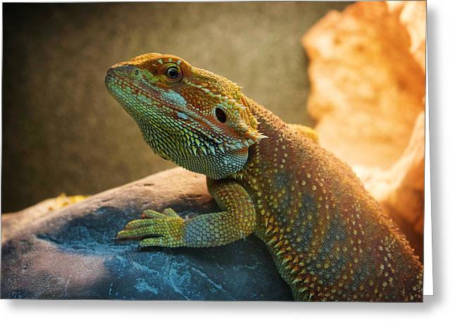 Cut-outs Paintings Greeting Cards - lizard Bearded Dragon Greeting Card by Celestial Images