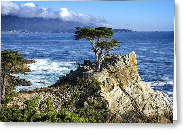 Recently Sold -  - Scenic Drive Greeting Cards - Lone Cypress Greeting Card by Leon Chang