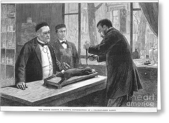 Chloroform Greeting Cards - Louis Pasteur (1822-1895) Greeting Card by Granger