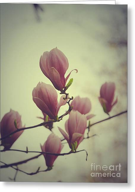 Pink Blossoms Greeting Cards - Magnolia Greeting Card by Jelena Jovanovic