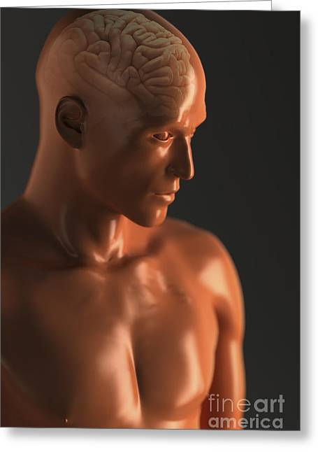 Central Nervous System Greeting Cards - Male Figure With Brain Greeting Card by Science Picture Co