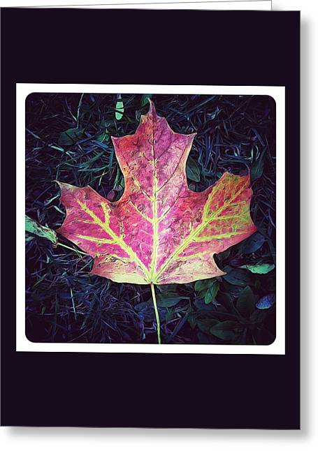 Red Leaves Digital Art Greeting Cards - Maple Leaf Greeting Card by Natasha Marco