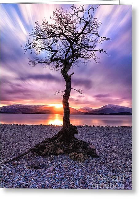 Colour Photographs Greeting Cards - Millarochy Bay Tree Loch Lomond Greeting Card by John Farnan