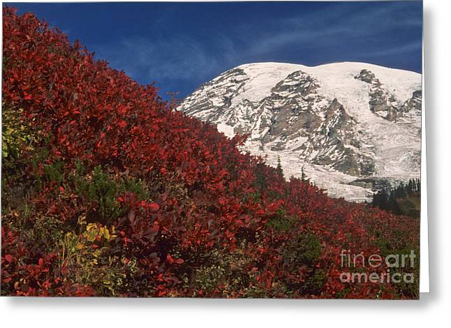 Huckleberry Greeting Cards - Mt. Rainier Greeting Card by Richard and Ellen Thane