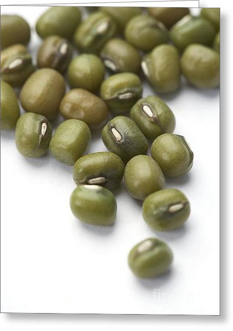 Green Beans Greeting Cards - Mung Beans Greeting Card by Jon Stokes