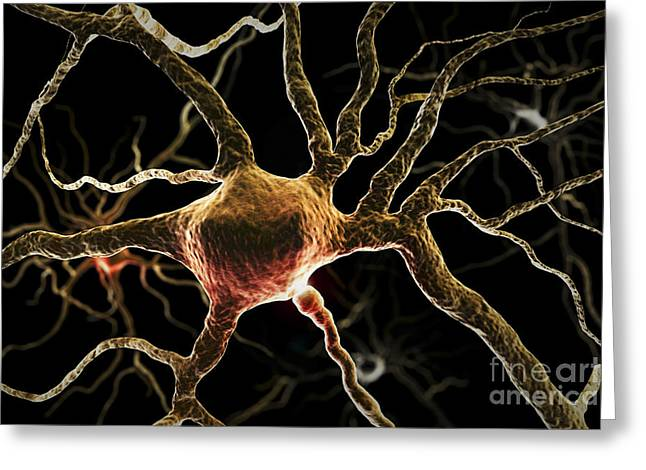 Nerve Cell Greeting Cards - Neurons Greeting Card by Science Picture Co