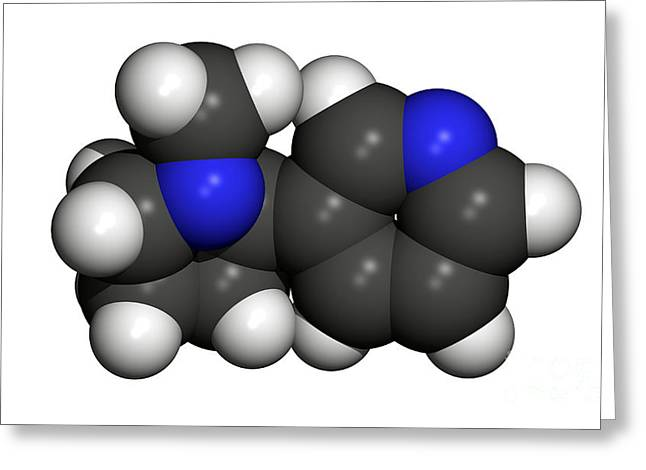 Tobacco Component Greeting Cards - Nicotine Molecule Greeting Card by Friedrich Saurer