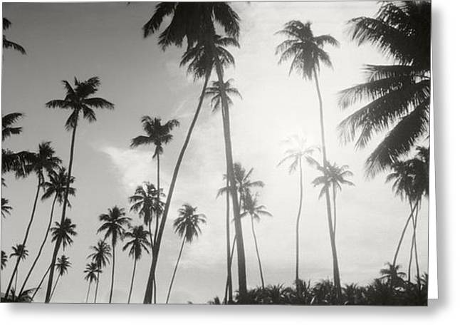 Morros Greeting Cards - Palm Trees On The Beach, Morro De Sao Greeting Card by Panoramic Images