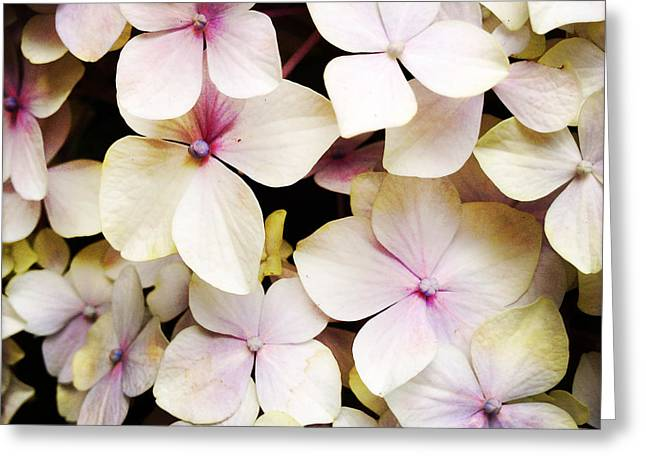 Nature Abstract Greeting Cards - Petals Greeting Card by Les Cunliffe