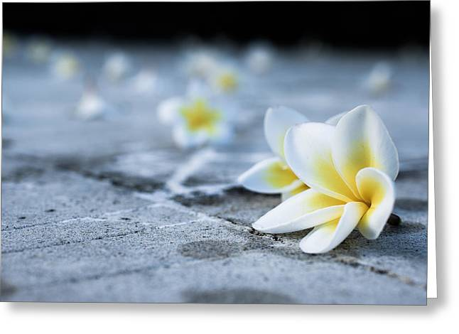 Asian Greeting Cards - Plumaria Flowers Greeting Card by Nila Newsom