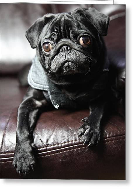 Tiere Greeting Cards - Pug Greeting Card by Falko Follert